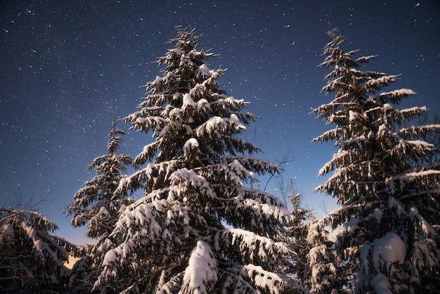 Um céu estrelado de uma natureza deslumbrante com pinheiros nevados e belas encostas de montanhas de inverno