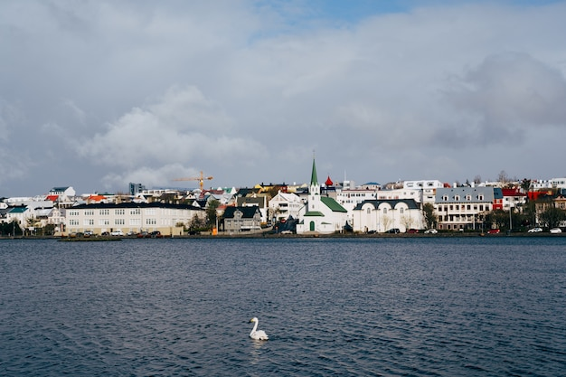 Um cisne branco nadando na água no lago tjornin na islândia reykjavik