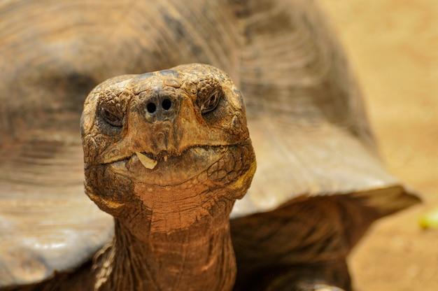 Um close-up de uma cabeça de tartaruga