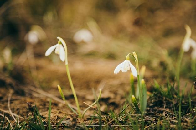 Um close-up de uma flor