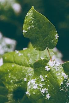 Um close-up de uma folha com flocos de neve