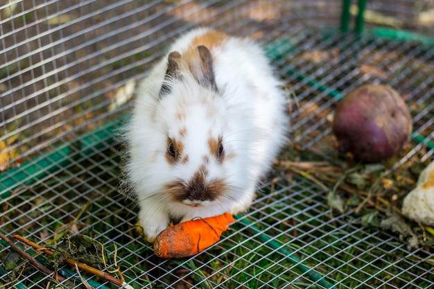 Um coelho branco fofo come cenouras em uma gaiola