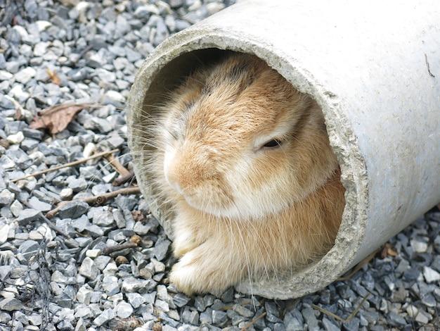Um coelho se esconde no buraco do túnel