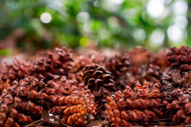 Um cone é um órgão das plantas na divisão pinophyta que contém as estruturas reprodutivas