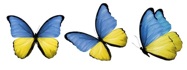 Um conjunto de borboletas com a bandeira da ucrânia nas asas isoladamente em um fundo branco. foto de alta qualidade