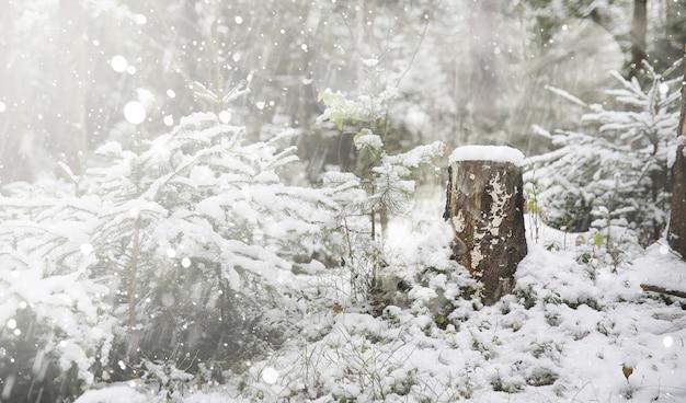Um copo com uma bebida quente na floresta de inverno. chocolate quente com canela no fundo da floresta de inverno. primeira neve e chocolate quente.