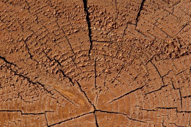 Um corte de uma árvore, um belo de uma textura de árvore.