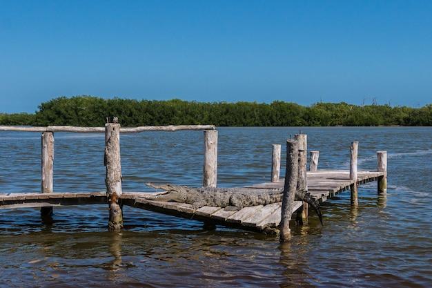 Um crocodilo na água com a natureza