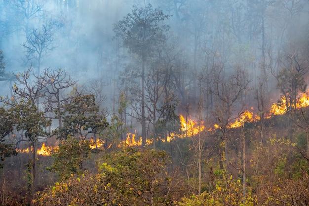 Um desastre de incêndio na floresta tropical está queimando causado por humanos