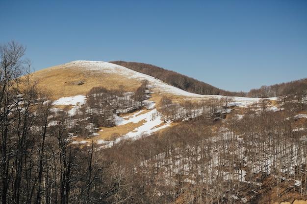Um dia claro e brilhante na colina de neve com floresta e céu azul no fundo.