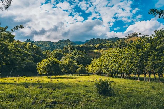 Um dia nublado na natureza com montanhas uma árvore