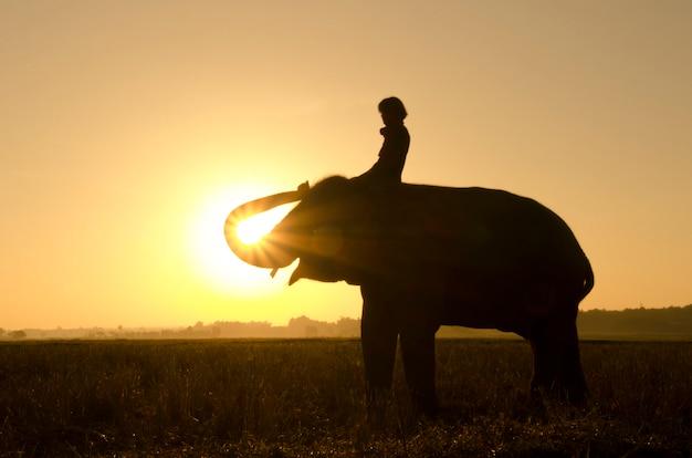 Um elefante em pé em um campo de arroz pela manhã. aldeia de elefantes no nordeste da tailândia, linda relação entre homem e elefante.