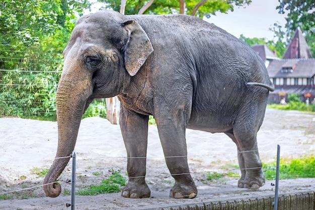 Um elefante em um zoológico
