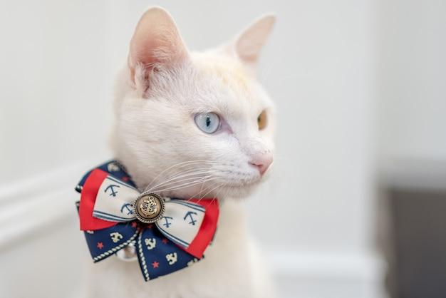 Um elegante gato boss branco, um olho é azul claro e o outro é amarelo claro