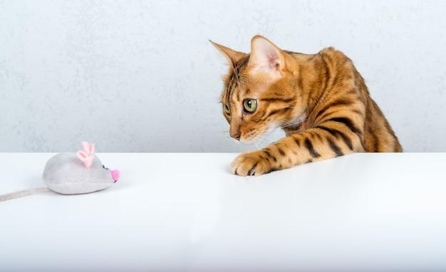 Um engraçado gato de bengala brinca com um pequeno rato cinza de pelúcia na mesa.