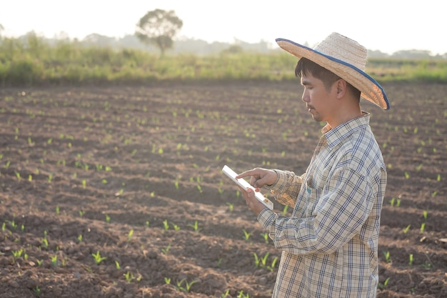 Um fazendeiro asiático usando um tablet para smartphone em uma fazenda de milho com o pôr do sol