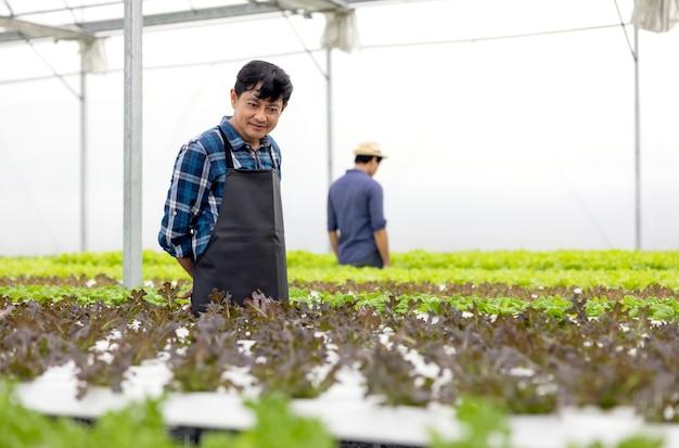 Um fazendeiro colhe vegetais de um jardim hidropônico. vegetais orgânicos frescos cultivados e agricultores trabalhando em uma estufa com uma horta hidropônica.