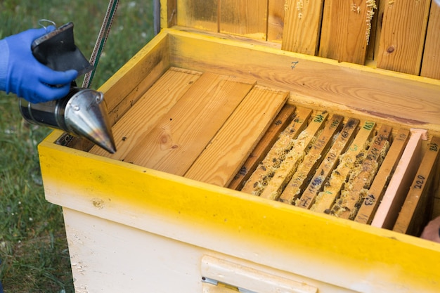 Um fazendeiro em um apiário apiário segura armações com favos de mel de cera preparação planejada para a coleta