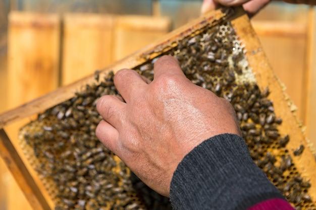 Um fazendeiro em um apiário de abelha segura quadros com favos de mel de cera. preparação planejada para a coleta de mel.
