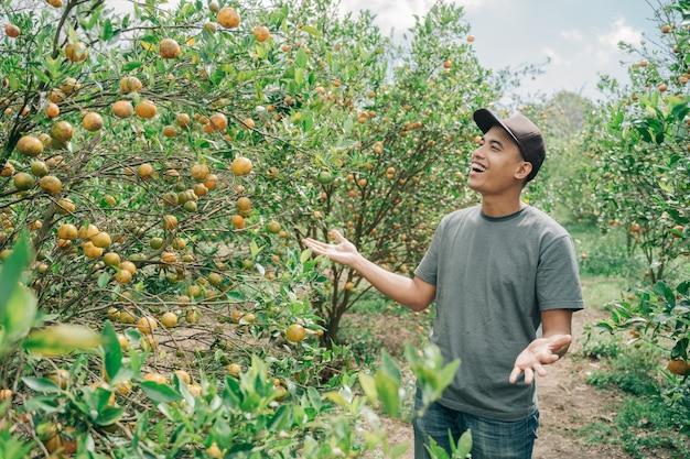 Um fazendeiro feliz colhe frutas na plantação de laranja