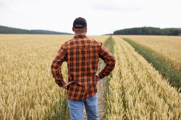Um fazendeiro fica em um campo de trigo e o inspeciona antes da colheita Foto Premium