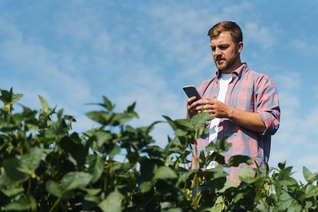 Um fazendeiro inspeciona um campo verde de soja. o conceito da colheita