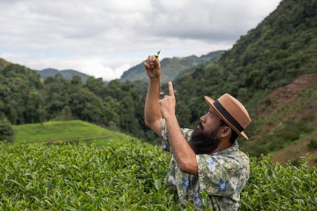 Um fazendeiro masculino com uma barba verifica o chá na exploração agrícola.