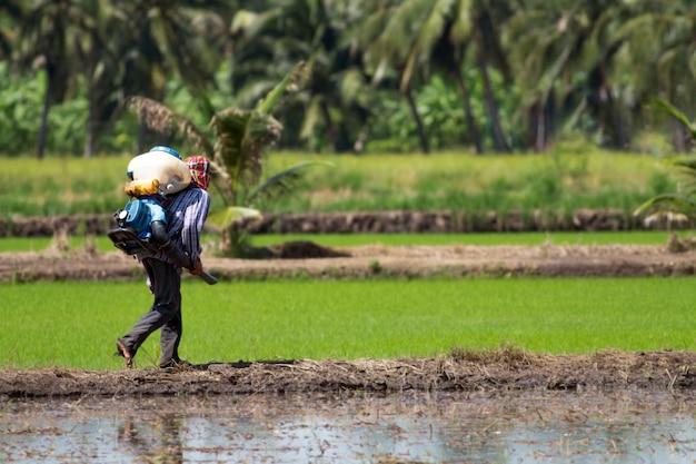 Um fazendeiro tailandês que anda para pulverizar para fora a semente da almofada usando a máquina de pulverização na tarde