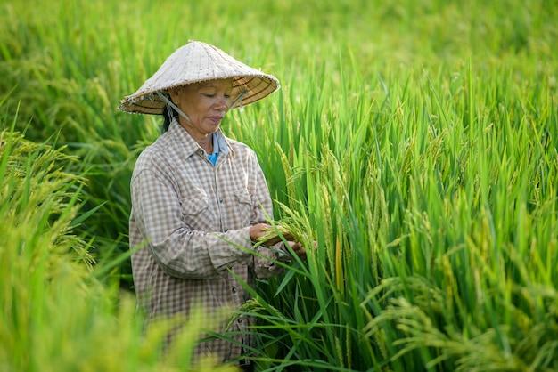 Um fazendeiro usando um chapéu vietnamita