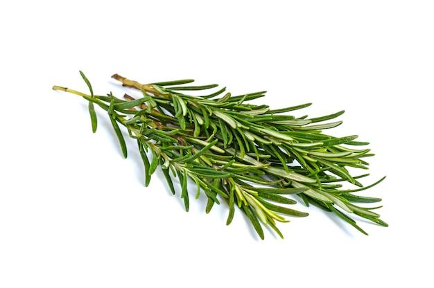Um feixe de ramos de alecrim verde isolado.