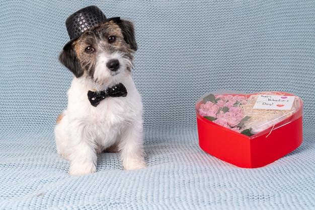 Um filhote de cachorro bonito jack russell terrier quebrado com gravata e chapéu senta-se ao lado de um buquê em um fundo azul claro. conceito de dia dos namorados. Foto Premium