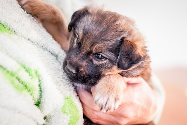 Um filhote de cachorro pequeno no braço de uma pessoa