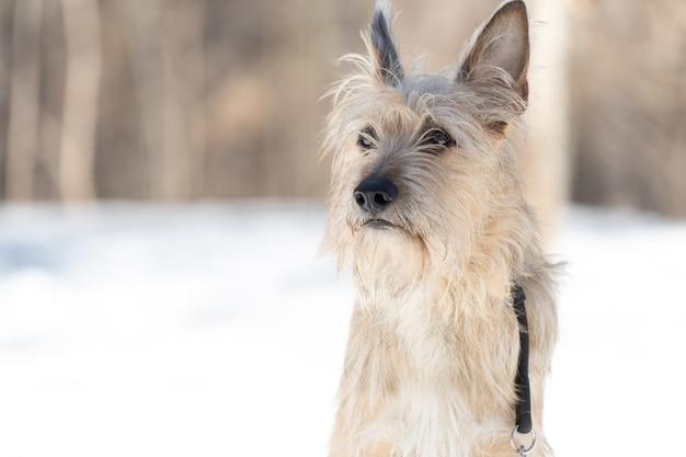 Um filhote de cachorro vira-lata na neve no inverno