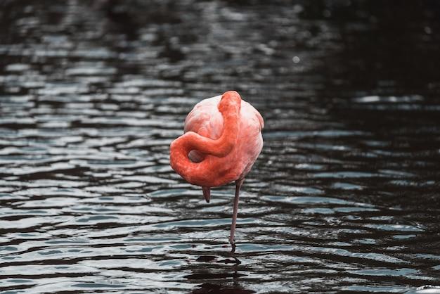 Um flamingo em um rio