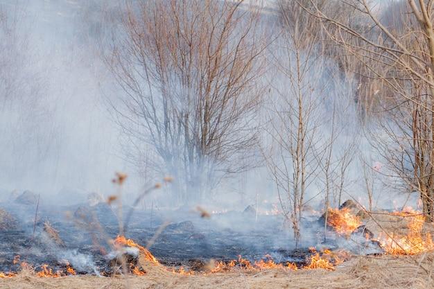 Um forte fogo se espalha em rajadas de vento pela grama seca, fumegando grama seca, conceito de fogo e queima da floresta