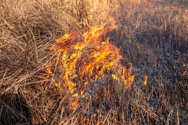 Um forte incêndio se espalha em rajadas de vento pela grama seca em um campo de outono em um dia claro.