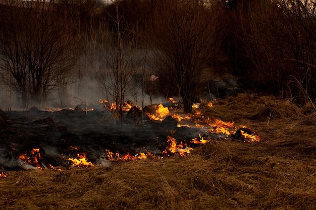 Um forte incêndio se espalha em rajadas de vento pela grama seca, fumegando grama seca, conceito de fogo e queima da floresta.