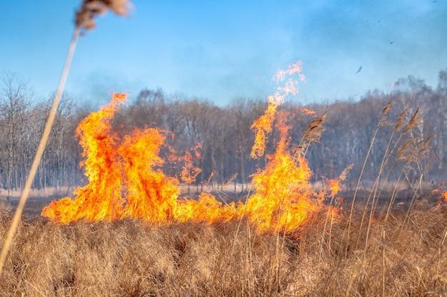 Um forte incêndio se espalha em rajadas de vento pela grama seca