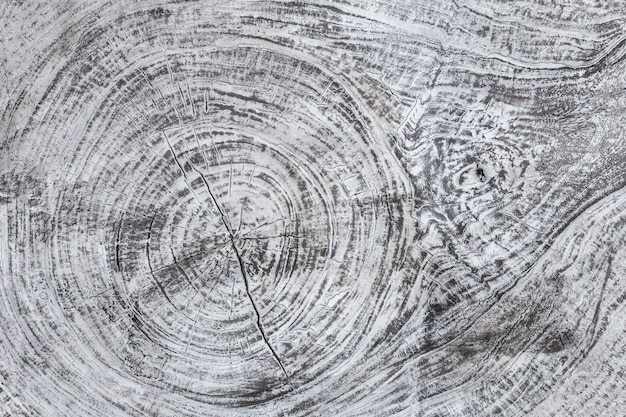 Um fundo cinzento textured de madeira. estrutura do material de madeira,