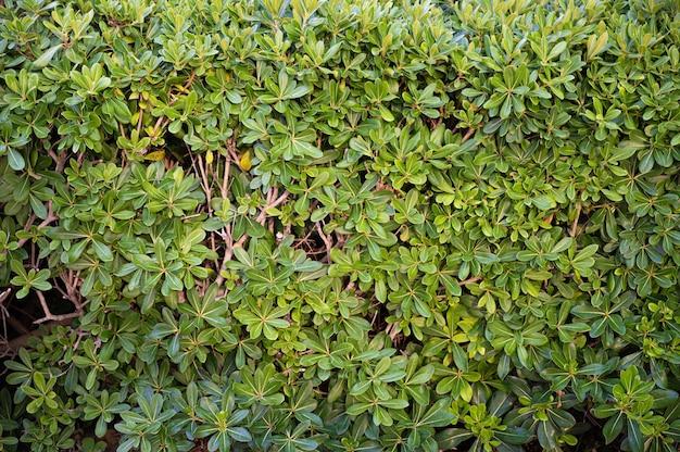 Um fundo de densa vegetação verde
