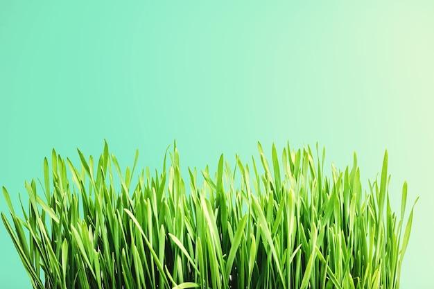 Um fundo de grama verde no céu
