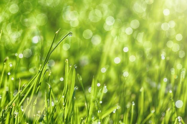 Um fundo de grama verde