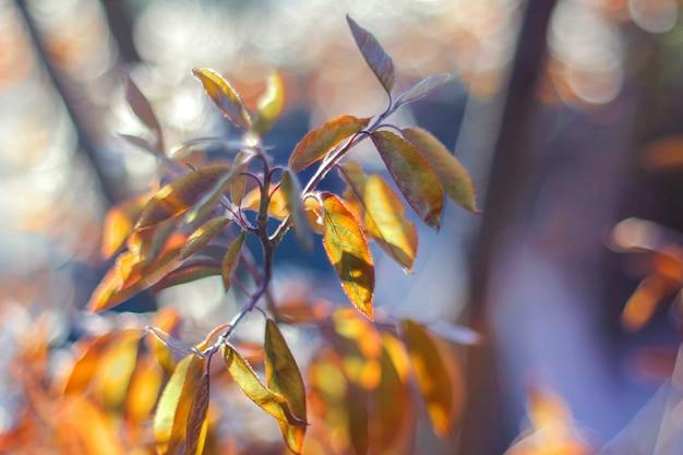Um galho de árvore com folhas frescas. o despertar da natureza na primavera. foco seletivo.