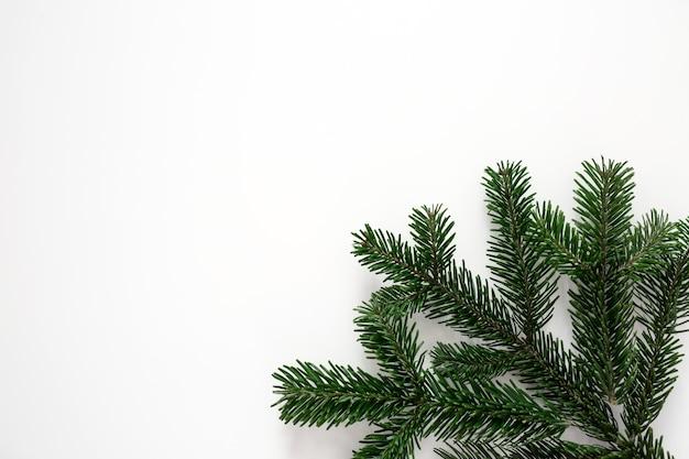 Um galho de árvore de natal verde em um fundo branco no canto do quadro.