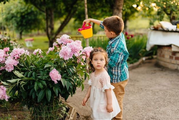 Um garotinho com sua irmã molhando linda peônia rosa flores durante o pôr do sol no jardim e sorrindo. agricultura, jardinagem.