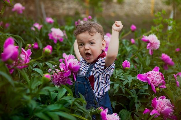 Um garotinho em um terno jeans entre os arbustos de peônias rosa, um grito de vitória e alegria.