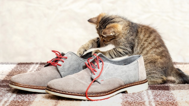 Um gatinho bonitinho listrado está brincando com sapatos