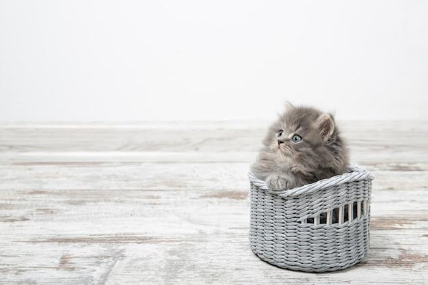 Um gatinho bonito de olhos azuis senta-se em uma cesta. com lugar para texto.