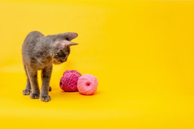 Um gatinho cinza brinca com bolas de pelo rosa em um fundo amarelo