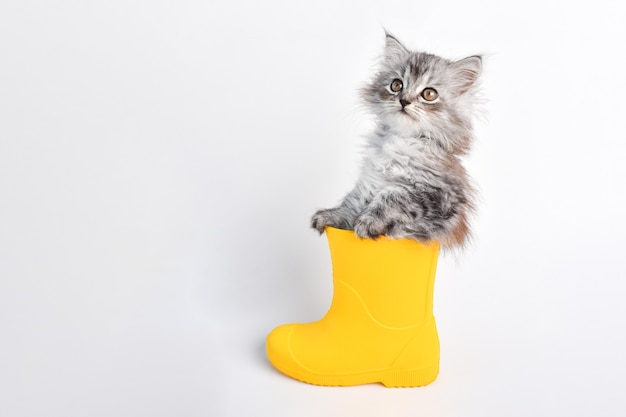 Um gatinho cinzento está sentado em uma bota de borracha amarela sobre um fundo branco.